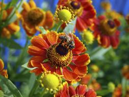 Bee_on_the_Flower_253_190_75_c1